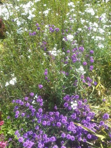 fleur feuille tige Les végétaux