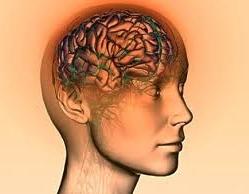 cerveau humain consommateur energie Problématique respiratoire