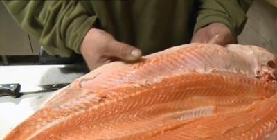 analyse saumon elevage Problématique des métaux lourds