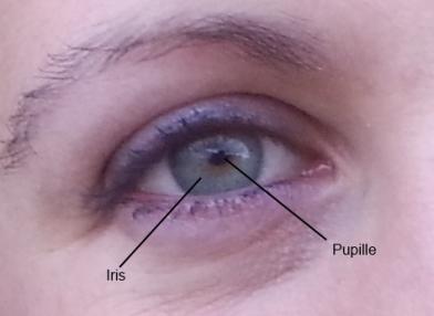 iris cornee oeil pupille Iridologie