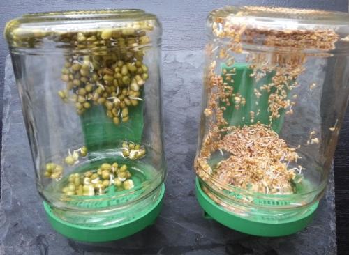 graines-germees-materiels-germination-panier-du-bien-etre-saint-pol-de-leon-nord-finistere-bretagne