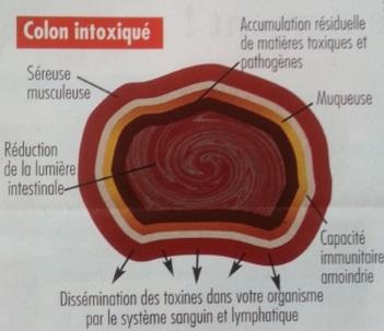 d toxination automne d toxiner colon pr server voies respiratoires. Black Bedroom Furniture Sets. Home Design Ideas