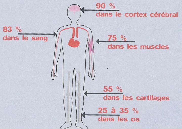 eau ou dans corps humain Shydrater et boire sain