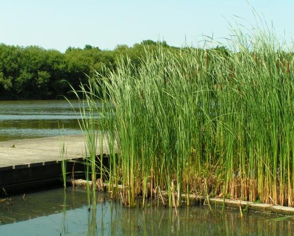 Purification naturelle ecologique de l'eau