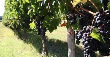 viticulture bio Rôle des Réseaux sociaux pour de bonnes causes