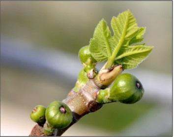 gemmotherapie-produits-herbalgem-disponibles-au-panier-bien-etre-saint-pol-de-leon-nord-finistere-bretagne